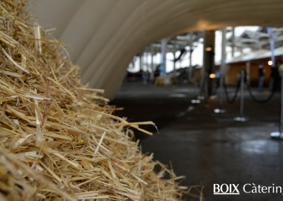 boix-catering-oktober-fest (8)